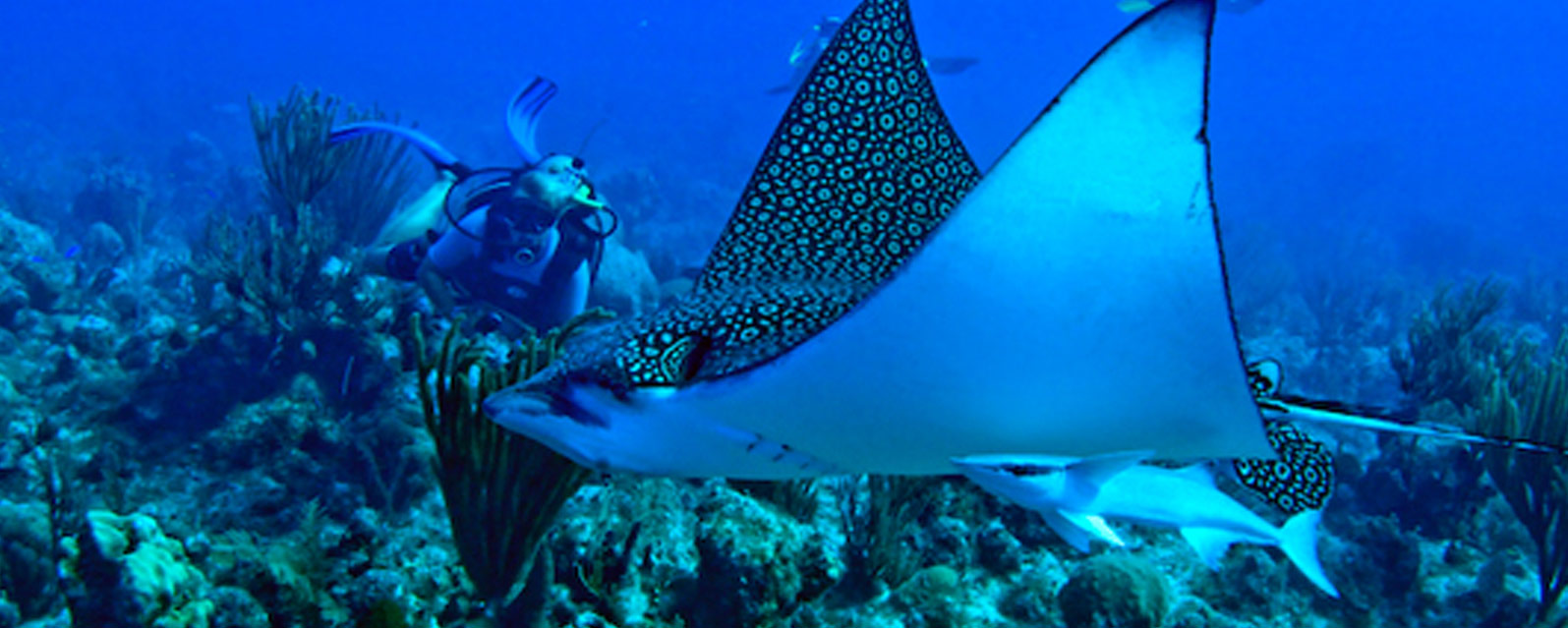 diving in Turks and Caicos Islands